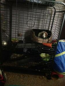 Tier Level Cage for small animal