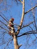 Tree Removal/Limbing/Pruning/Climbing/Insured/Free Quotes