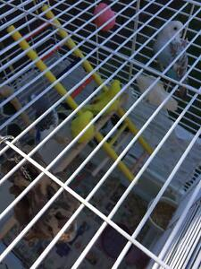 5 budgie with cage