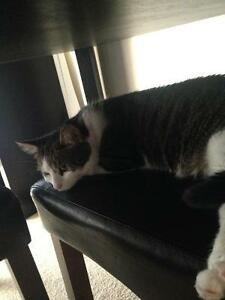 3 year old male neutered cat