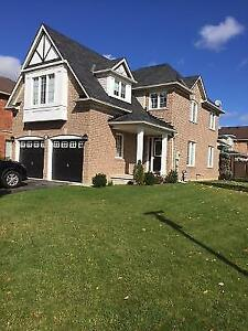 Single Professional Walkout Basement Apt in  Mississauga