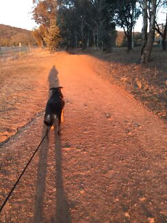 Dog Walker in North Canberra