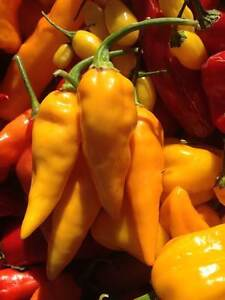 Carolina Reaper/ Ghost Pepper/ Chili Pepper seeds and Hot Sauce London Ontario image 10