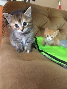 6 free kittens to give away to good homes