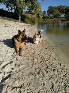 Ellenbrook Dog Walking/Pet-Sitting Service Ellenbrook Swan Area Preview