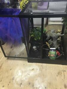 Screen reptile enclosure with everything you need