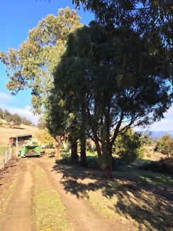 Griggs ground care, tree and stump removal