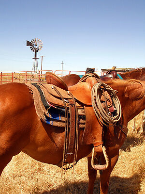 How to Tie a Western Cinch