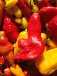 Carolina Reaper/ Ghost Pepper/ Chili Pepper seeds & Live Plants Kitchener / Waterloo Kitchener Area image 9