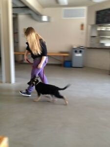 Puppy Obedience Class: S.T.A.R.T. Great Beginnings London Ontario image 2