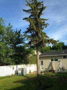 Ajs tree removal and yard clean up Regina Regina Area image 7