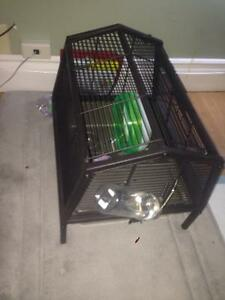Hamster and cage