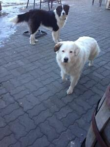 2 Dogs looking for a new home...