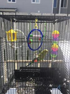 1 green budgie,one cage with acsesories