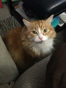 Beautiful cat to good home