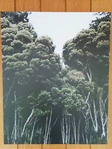 RRP$77 New Printed Canvas Art - Gallery Wrapped - Forest Trees Strathmore Moonee Valley Preview