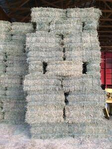 Quality horse hay for sale