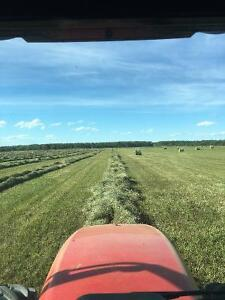 Quality dry Hay for sale