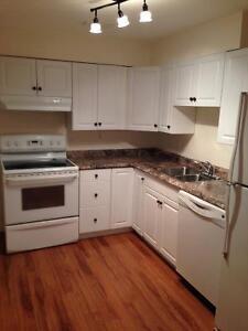 1200 square foot 1BR basement suite