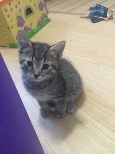 3 kittens free to good home