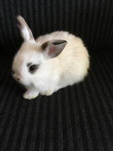 Baby bunny ready to go to new home