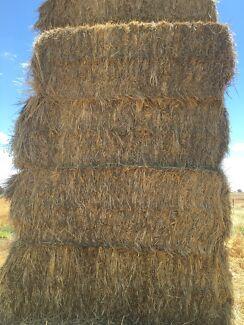 Wheaton hay