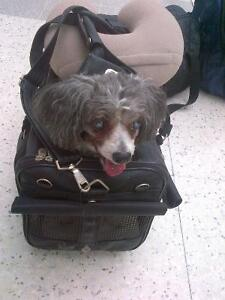 Airport Approved Carrier