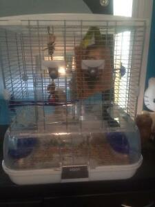 Bird and cage for sale 150 Ono