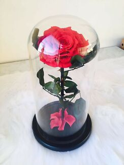 Enchanted beauty and the beast forever rose