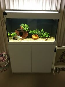 Fish tank 4 ft with sump Kearneys Spring Toowoomba City Preview