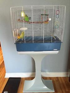 2 Budgies with cage, stand, food and toys