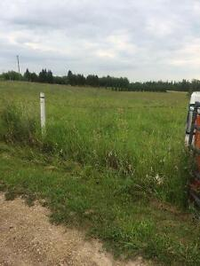 9 acres land for 0 lease for Seedid next summer and haul away