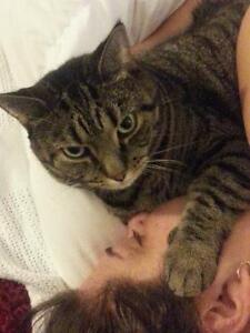 FREE:  loveable, neutered male cat, strictly indoor