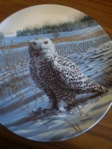 Collector's Dish - The Snowy Owl Prince George British Columbia image 1