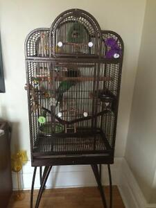 Pearly Conure with large cage