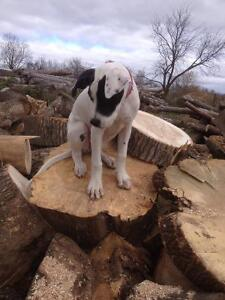 Logs, firewood logs and sawmill logs, clear out prices