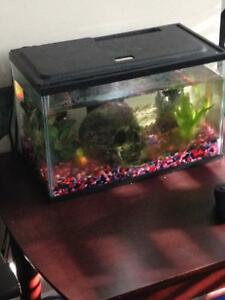 Looking to sell full aquarium + fish + dwarf frog!