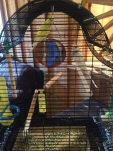 Canary's with Cage