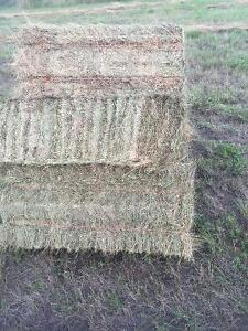 Excellent horse hay small square bales