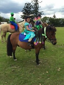 Leadline pony Burpengary Caboolture Area Preview