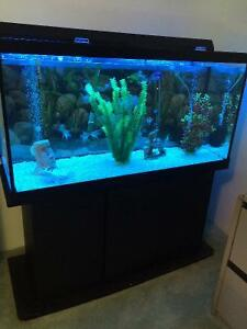 Koi kijiji free classifieds in ontario find a job buy for 90 gallon fish tank for sale