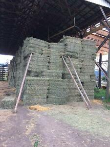 Alfalfa grass hay for sale