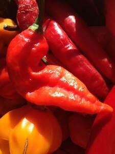 Carolina Reaper/ Ghost Pepper/ Chili Pepper seeds & Live Plants Stratford Kitchener Area image 3