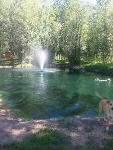 2 Acres of Paradise Located 2 mins to boating dock in Faust AB