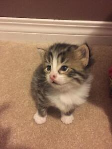 Kitten looking for a good home