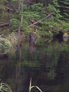 Très grand terrain boisé Saguenay Saguenay-Lac-Saint-Jean image 2