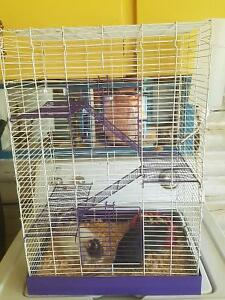 2 female rats with cage and accessories