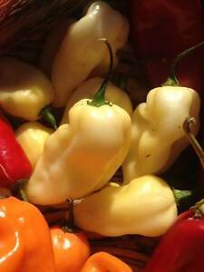 Carolina Reaper/ Ghost Pepper/ Chili Pepper seeds and Hot Sauce Cambridge Kitchener Area image 1
