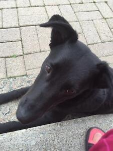 9 month female Dog for rehome