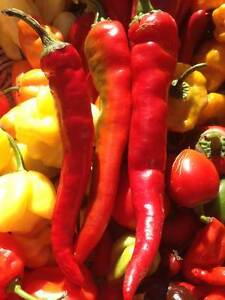 Carolina Reaper/ Ghost Pepper/ Chili Pepper seeds and Hot Sauce Stratford Kitchener Area image 10